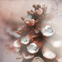 Kerstkaarten - Kerstkaart Stijlvol dennenappel