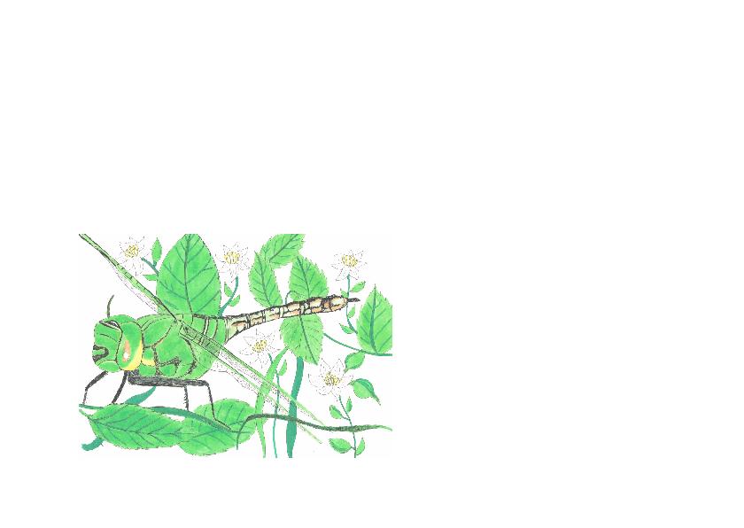 Libelle met bramen 2