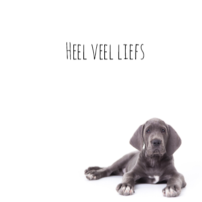 Liefde -mis je- Duitse dog puppy 3