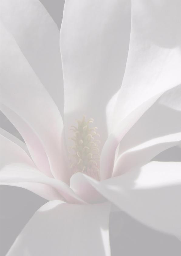 Magnolia bloem 3