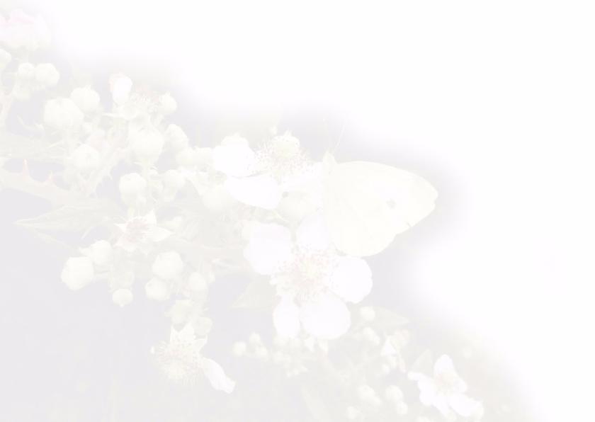 moederdag kaarten - vlinder 3