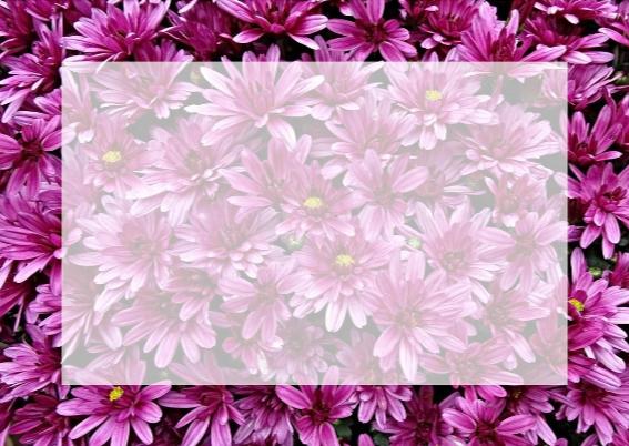 Mooie bloemenkaart met Chrysanten en kaartje voor tekst 3