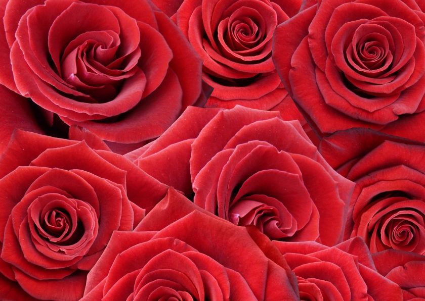 Mooie bloemenkaart met rode rozen om iemand te feliciteren 2