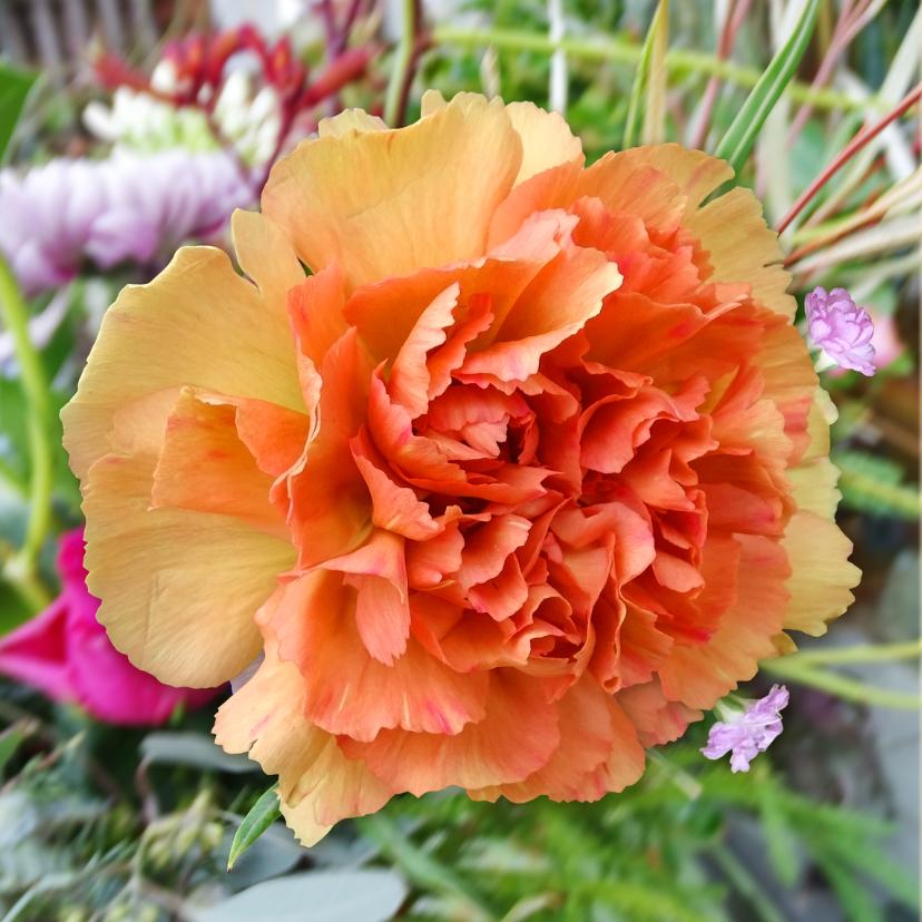 Mooie bloemenkaart met roos voor diverse gelegenheden 2