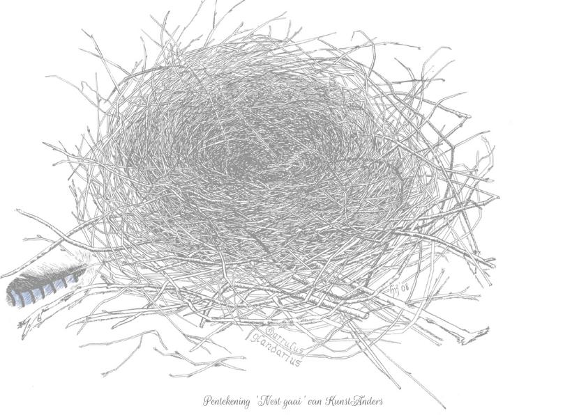 'Nest Vlaamse Gaai' 2