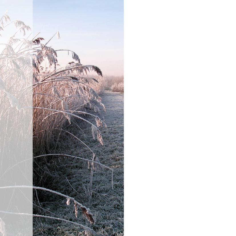Nieuwjaar vredig winterse natuur 2