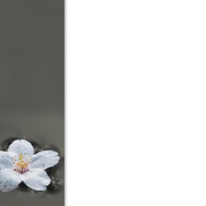 Prunusbloem drijft op water 2