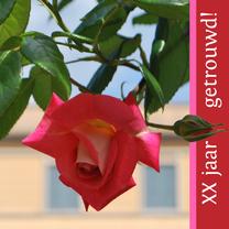 Jubileumkaarten - Rode roos met tekst