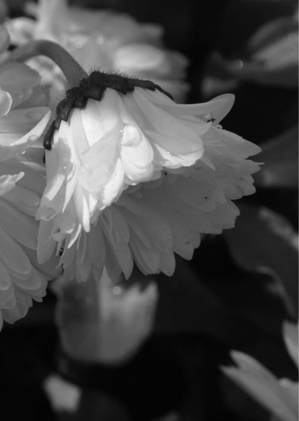 Rouwkaart bedankkaart bloem dauwdruppels - SK 2