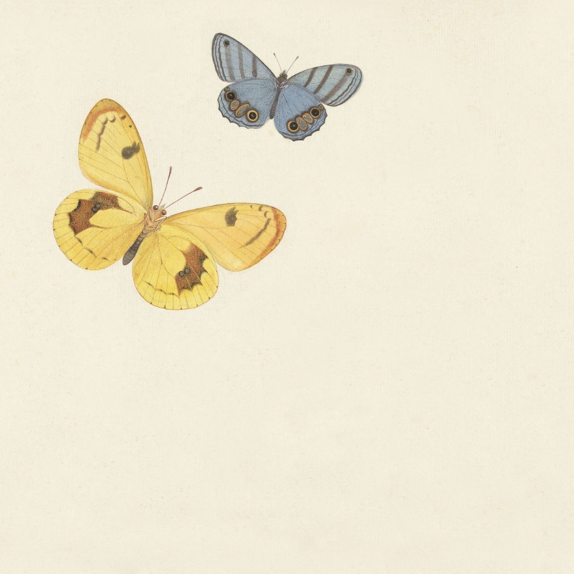Rouwkaart bedankt met vintage vlinders 2