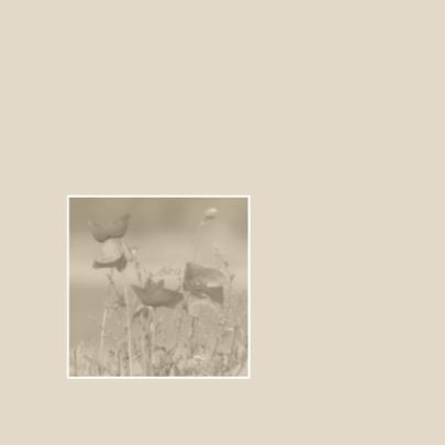 rouwkaart klaprozen 2
