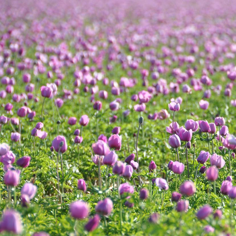 Rouwkaart Veld met roze bloemen 2