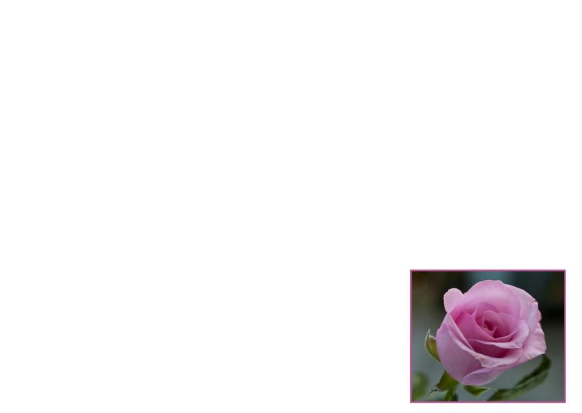 roze rozen voor jou  3