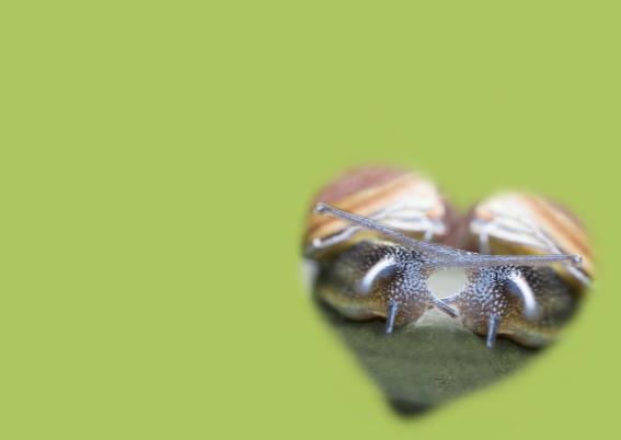 samenwonende slakken 3