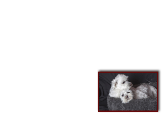 schattige hondjes 3