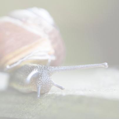 slak verhuisd 2