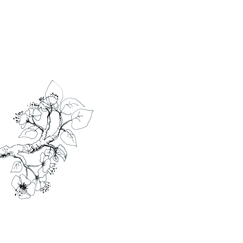 Sterkte kaart, bloesem tekening 2