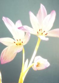 Sterkte kaarten - Sterkte kaarten- light flower