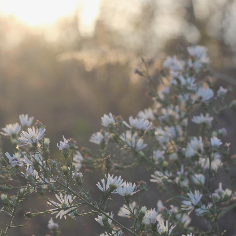 Sterkte met bloemen / condoleance 2