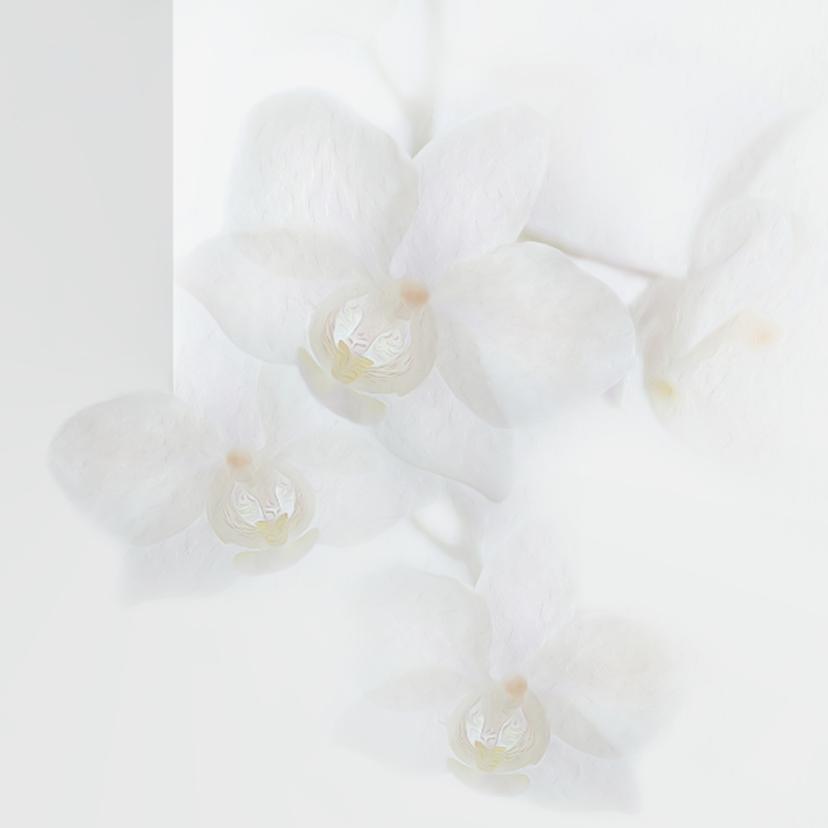 Sterkte met orchideeën 2