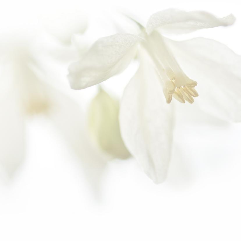 Sterkte met witte bloemen 2