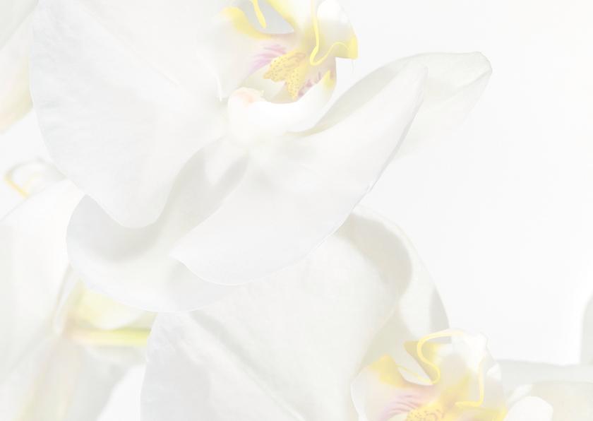 Sterkte-Orchideen 3
