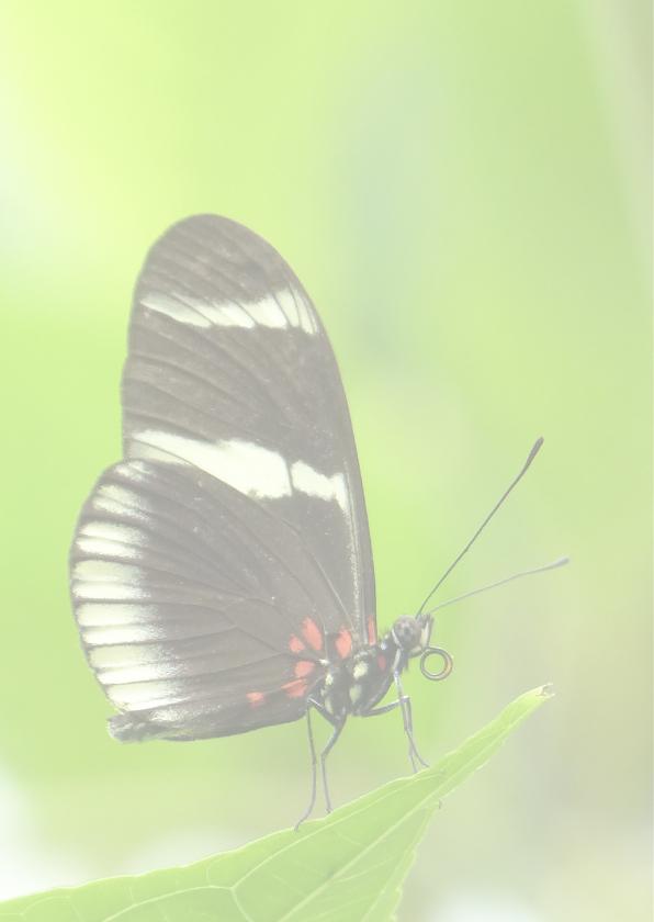 Sterkte Vlinder in het groen 2