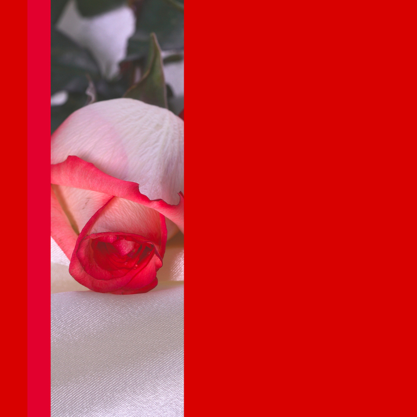 Trouwkaart rood met rode rozen 2