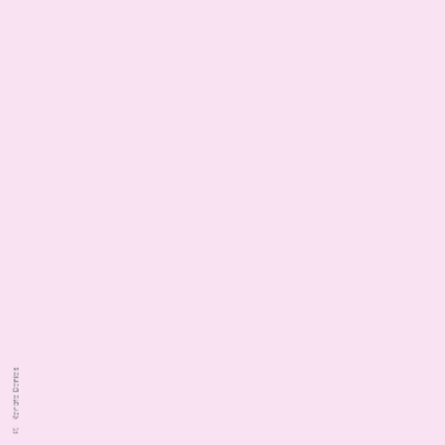 Tulpen roze paars blauw wit 2