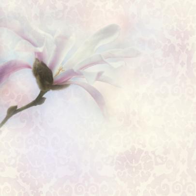 Uitnodigen met magnolia 2