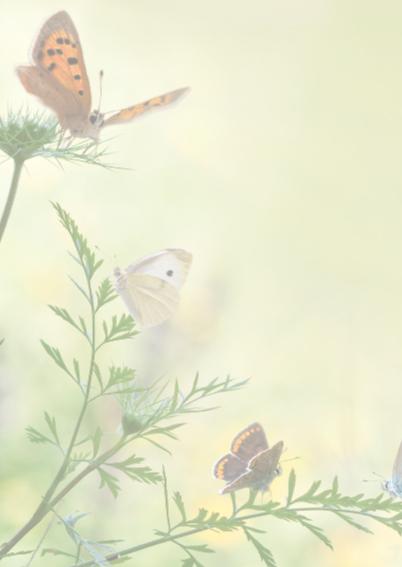Uitnodigen met vlinders 2