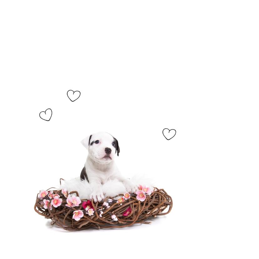 Valentijn - Puppy Love - Hond hangmat roze 2