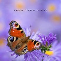 Verjaardagskaarten - Verjaardag vrolijk met vlinder