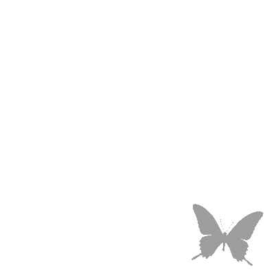 Vlinders paars met grijs 3