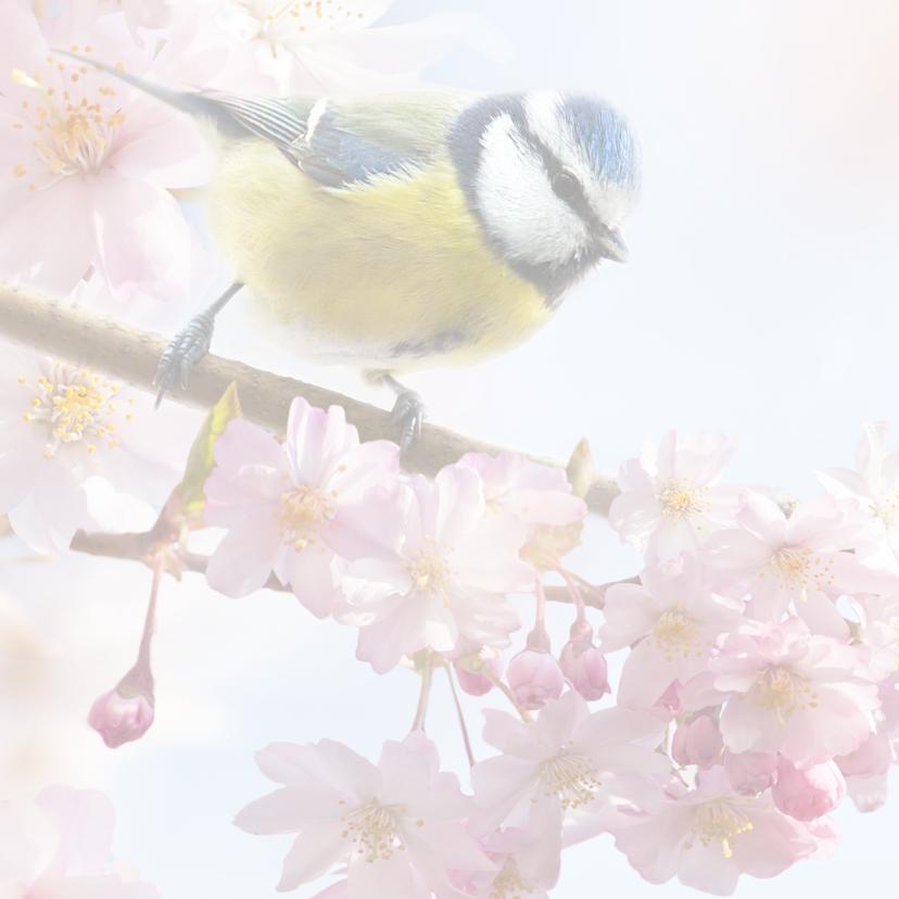 Vrolijke felicitatie met vogels 2