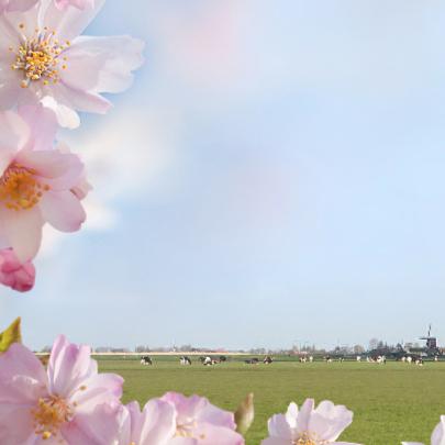Welkom met voorjaarsbloemen 2