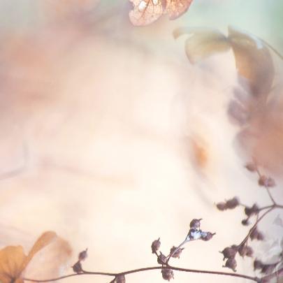 Wens met hortensiabloemen 3