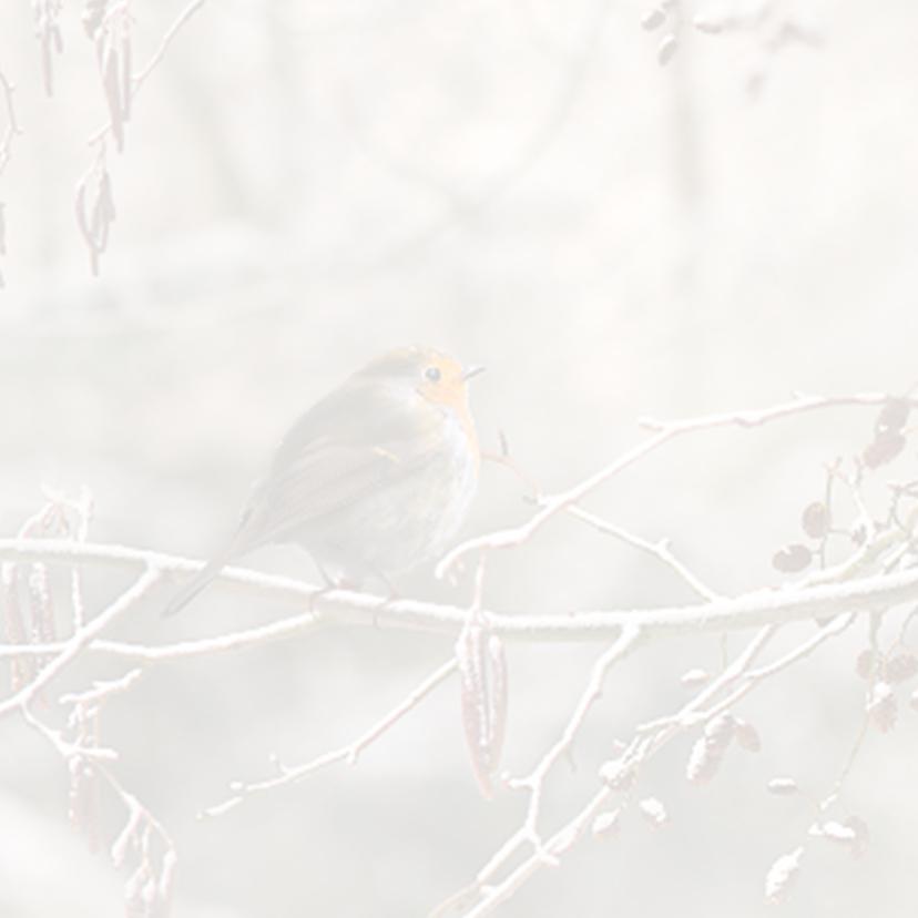 Winters bos met roodborstje 2