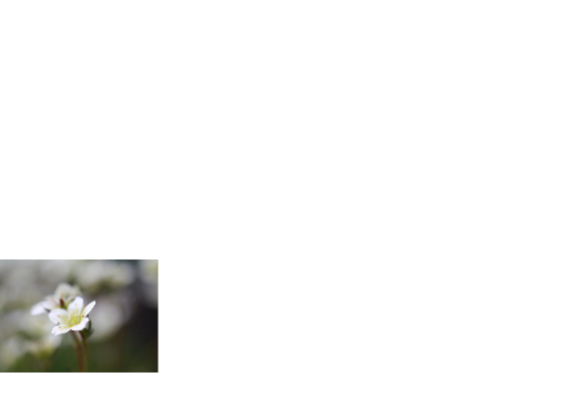 Witte bloem rouwkaart 2