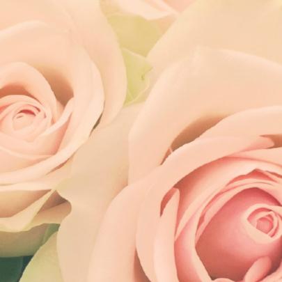 zachte roos 2
