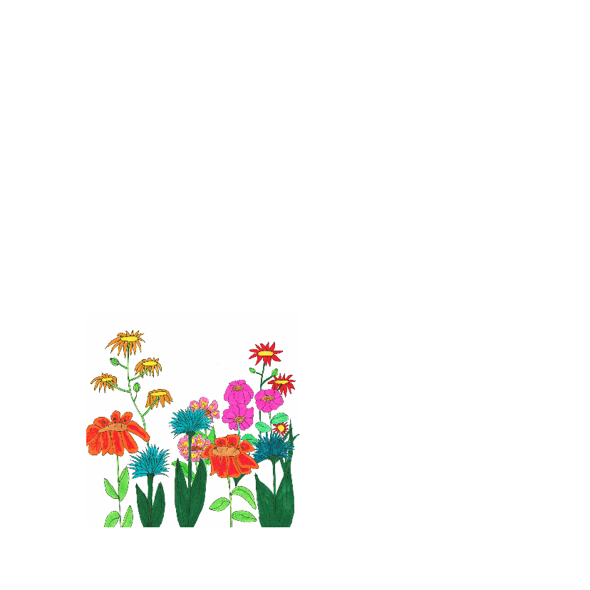 Zomer bloemenkaart 2