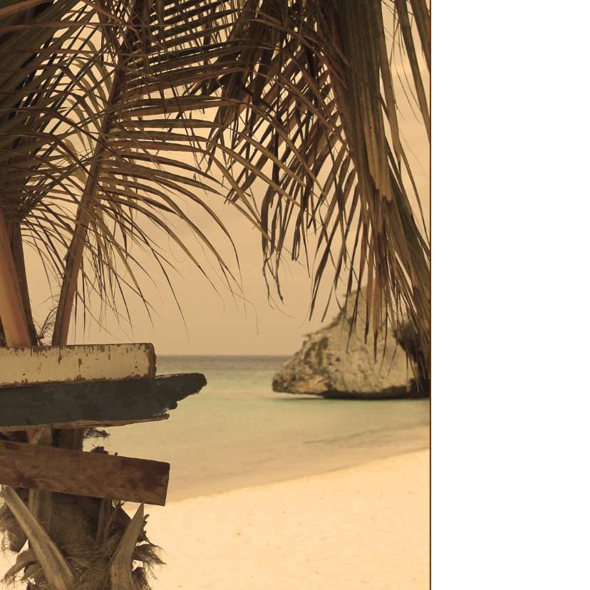 Zomerse kaart strand palmboom 4k 2