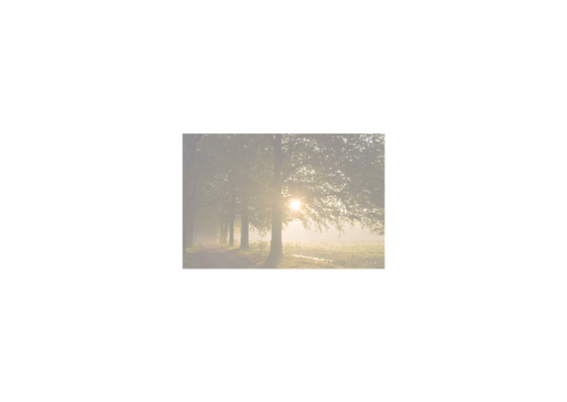 Zonlicht schijnt door pad met bomen 2