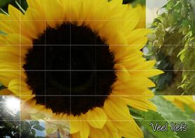 Zomaar kaarten - zonnebloem en groen in de zon