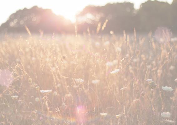 zonneschijn over veldbloem 3